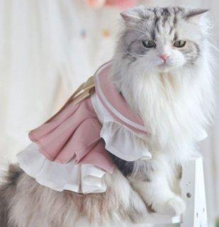 ペット用コスチューム 猫用 ネコちゃん かわいい 甘ロリ ワンピース ドレス ワンピ フリル バイカラー リボン セーラー服 プリーツ メイド風 レース ふんわり おしゃれ イベント おでかけ ゴスロ