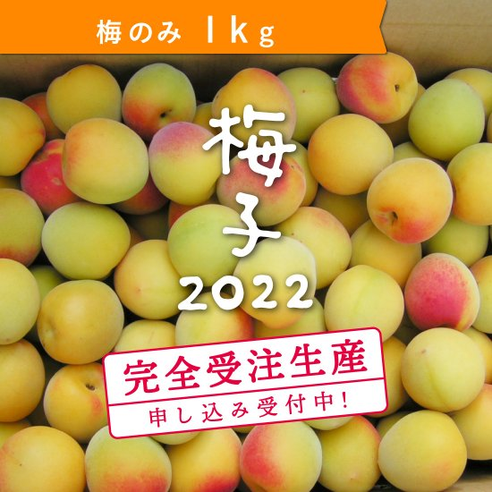 1kg   梅子の梅(梅のみ)【受付終了】