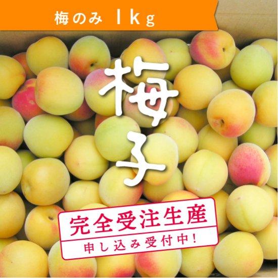 【受付終了】 1kg   梅子の梅(梅のみ)