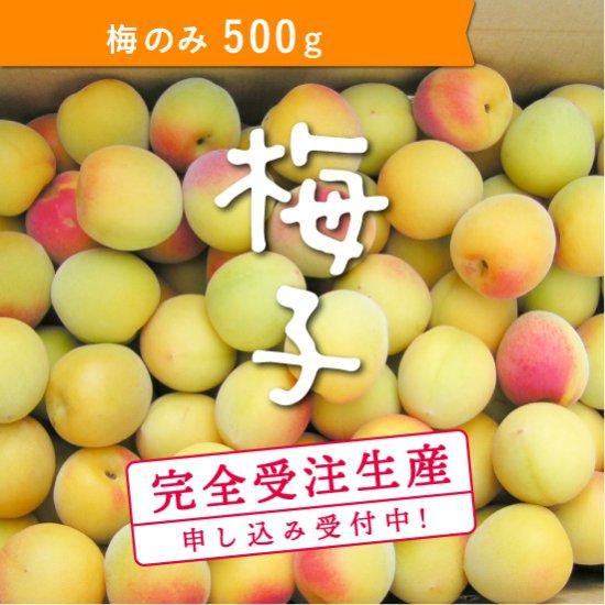 500g   梅子の梅(梅のみ)【受付終了】