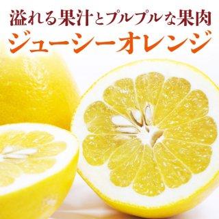 【送料無料】溢れる果汁!ぷるぷるな果肉!飲む様に食べる!ジューシーオレンジ(河内晩柑) 7kg