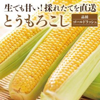 農家直送!朝採り!とうもろこし(ゴールドラッシュ)【2箱以上購入で送料無料!】