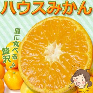 夏に食べるみかん!熊本県産 ハウスみかん2kg【送料無料】