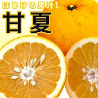 甘夏(あまなつ) 5kg【送料無料!】