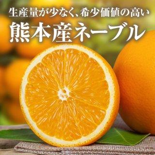 【送料無料】熊本産ネーブル5kg