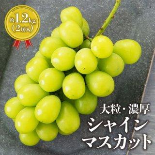 シャインマスカット【送料無料】