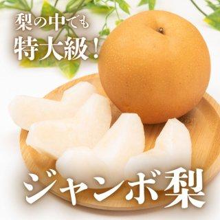 【送料無料】ジャンボ梨(新高)約4kg