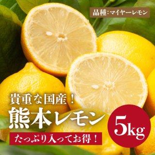 お得用!!【送料無料】熊本レモン 5k