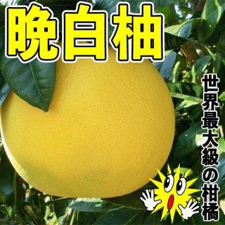 【送料無料!】晩白柚(ばんぺいゆ) L玉(1玉入り)
