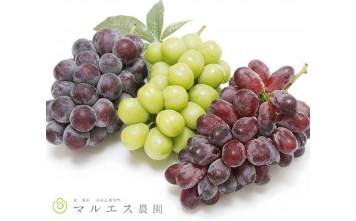 旬の葡萄3色セット 1.5kg以上