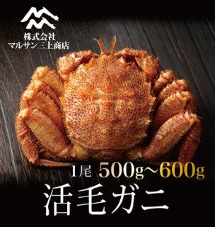 活毛ガニ 北海道産 500~600g