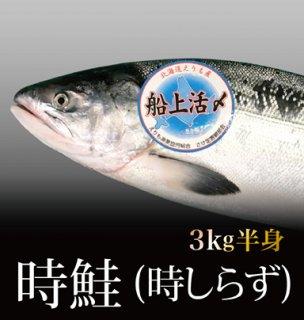 時鮭 (時しらず) 3kg姿の半身