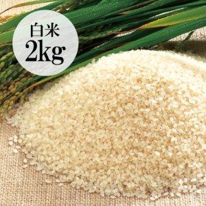 群馬県・金井さんの有機栽培こしひかり白米2kg
