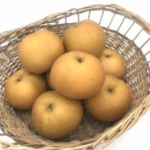 特別栽培 梨 豊水(1個)