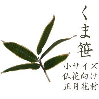 [12月10日〜12月30日にお届け]クマザサ 笹の葉 小 1枚より 生花