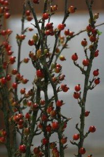 やぶさんざし 1本 115cm程度 生花 切花