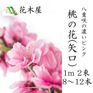 [2月1日ごろより発送開始]桃の花 ひな祭り 花 生花 矢口桃1m・2把