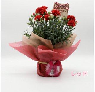 花木屋 カーネーション レッド 鉢植え 5号 赤 母の日 プレゼント
