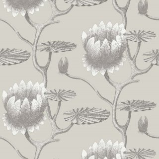 Summer Lily / 95/4025 / The Contemporary Collection / Cole&Son