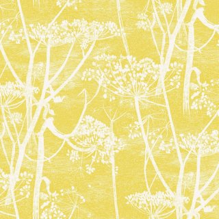 Cow Parsley / 66/7051 / The Contemporary Collection / Cole&Son