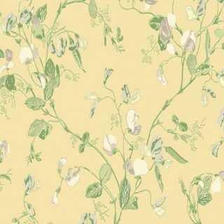 Sweet Pea / 100/6029 / Archive Anthology / Cole&Son