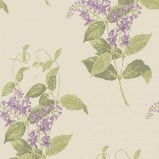 Madras Violet / 100/12056 / Archive Anthology / Cole&Son