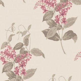 Madras Violet / 100/12058 / Archive Anthology / Cole&Son
