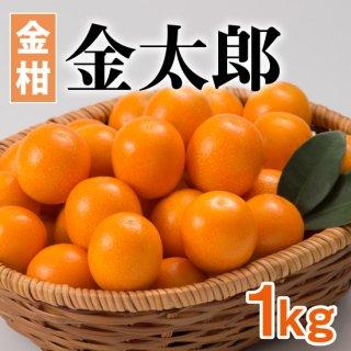 【金柑】金太郎 1kg(40〜60個)