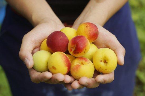☆夏限定品☆和歌山県でオーガニックの梅を作ってる深見梅店様の完熟梅を使用して栄養士さんが無添加梅ジャムをつくりました。※パッケージ変わりました。
