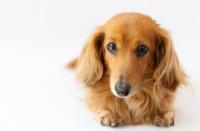 犬用-For DOG