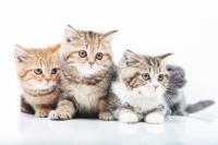 猫用-For CAT