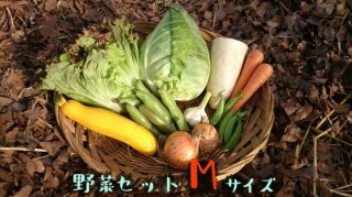 [送料込み]野菜セット レギュラーサイズ