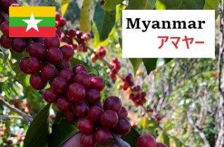 <img class='new_mark_img1' src='https://img.shop-pro.jp/img/new/icons13.gif' style='border:none;display:inline;margin:0px;padding:0px;width:auto;' />Myanmar Amayar 中煎り(100g)