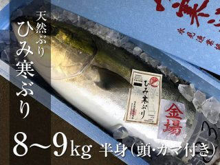 ひみ寒ぶり 8〜9kg 半身(頭・カマ付き)