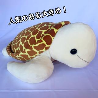 《テイクオフ》ウミガメ L