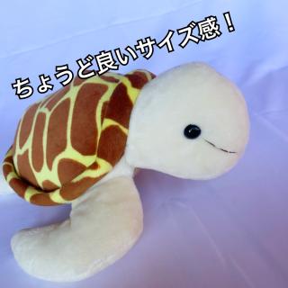 《テイクオフ》ウミガメ M