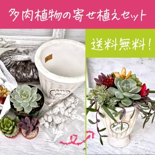 [送料無料!]初めての方向け 多肉植物の寄せ植えセット