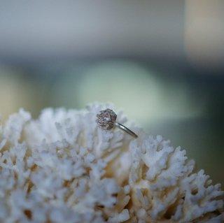 白詰草のリング゙-clover/trifolium repens  ring- (silver925・シルバー)