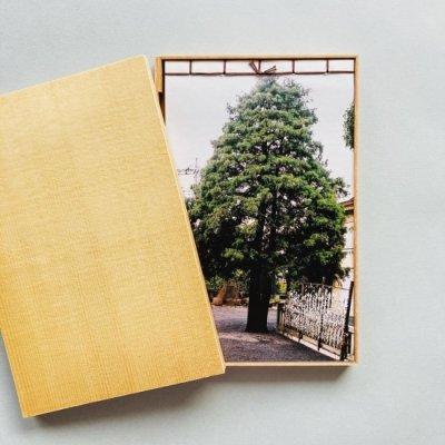 〈新品〉木のなかに森がみえる<br>立花文穂 Fumio Tachibana