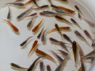 十魚十色(10匹セット)