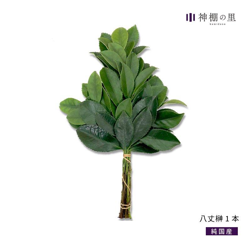 【送料無料】純国産 八丈榊(小)1房 生の榊