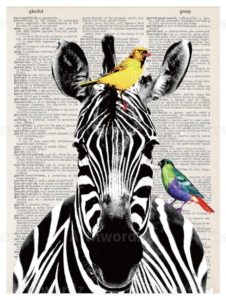 Zebra B/W