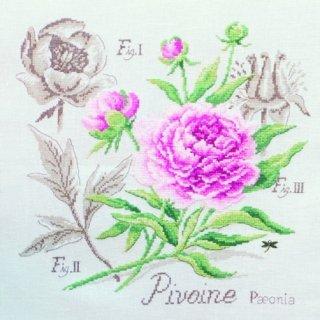 壁掛け Etude a la Pivoine(牡丹のエチュード) クロスステッチキット