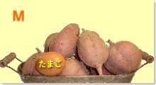 完熟安納芋(紅)M 5�