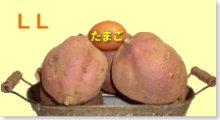 完熟安納芋(紅)LL 5�