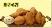完熟安納芋(黄金)S 10kg