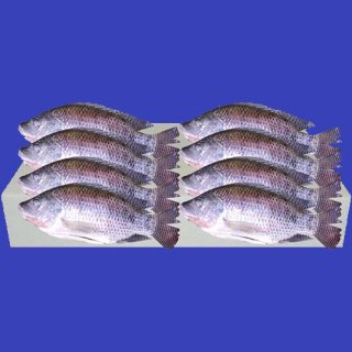 CLEANED TILAPIA (L) 450-550g 1case 8Kg