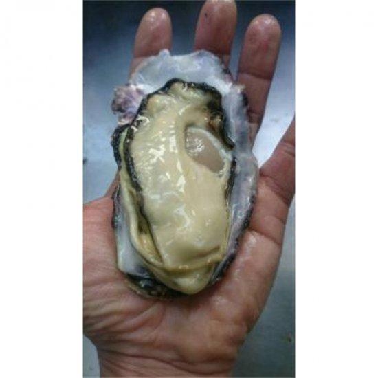 生食用 広島ブランド牡蠣かき小町5� Mサイズ80〜110g/個