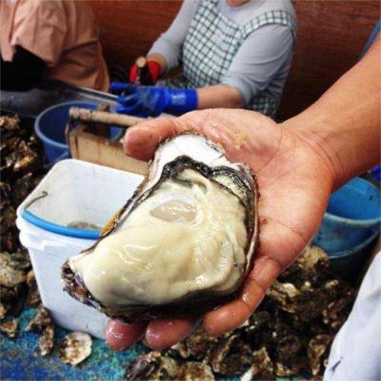 生食用 広島ブランド牡蠣かき小町5� Lサイズ80〜110g/個
