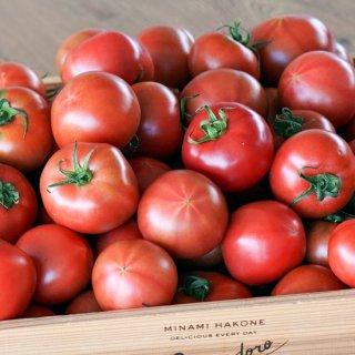 【糖度8】丹那高原トマト